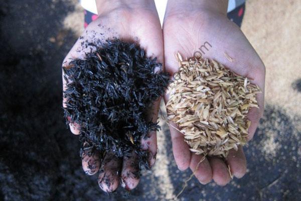 rice husk charcoal (3)