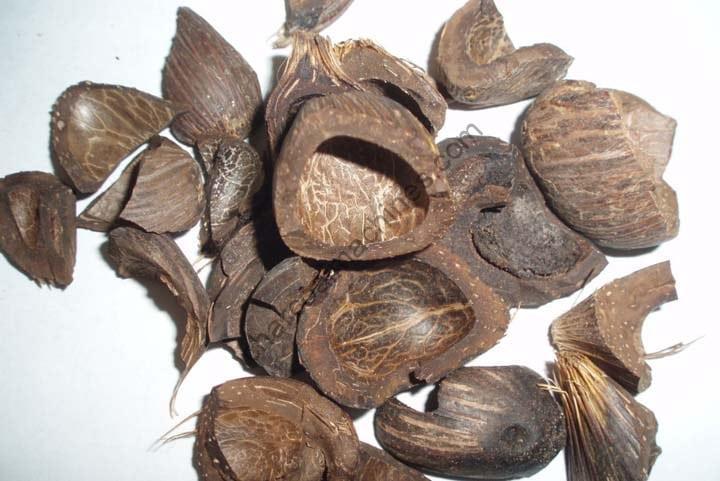 palm kernel shell