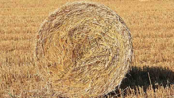 straw-role